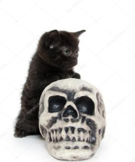 depositphotos_13498460-stock-photo-black-kitten-with-skull